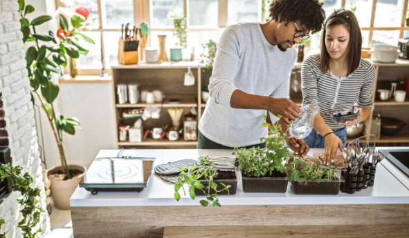 Things you should know when thinking about adding plants to your kitchen