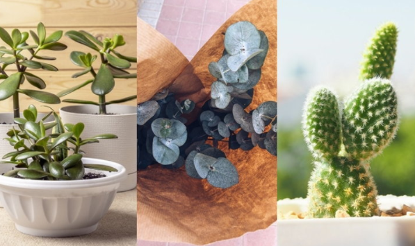 5 plants to decorate the house, beautiful